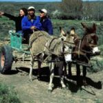 Donkeycart - Still used today on most farms in the area