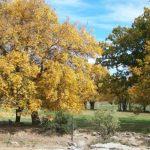 gunsfontein-guest-farm-4